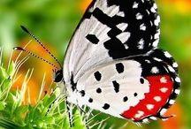 Butterflies /Dragonflies /Moths/Mantes / by Fay Skidmore