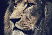 tat for kay / sleeve: girl w/ long flowing hair, lion, deer / by Kyla Peirce