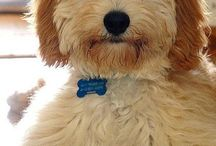 Puppy! / by Maggie Bailey