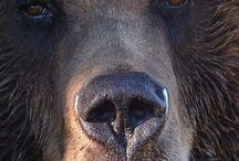 Wild Animals / Pics of Wild Animals / by Johnny Yazzie