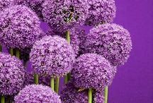 Purple / by Annette Whelan