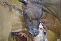 horses / by Joni Freeser