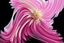 Flowers / by Kathy Dietkus