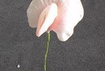 Gumpaste flowers - tutorials / by Helen Greene
