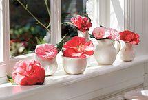 Flower Arrangements  / by Stephanie Blankenship
