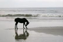 horses r love / by Brandi Gagnon