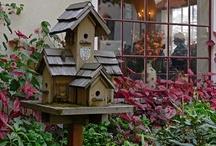 Birdhouses & Bird Cages / by Elayne Forgie