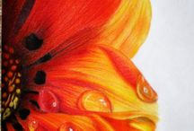 Colored Pencil Botanical / by Sammie Justesen