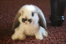 animals- bunnies / by Cindy Hertz