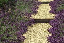 garden / by Nancy Lambert