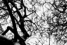 Nature Inspired: Branches / by Michael Aram