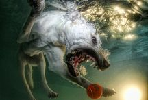 Underwater Dogs / by Max The Dog