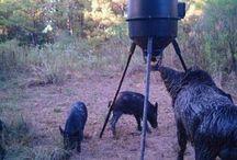 Hog / by hunter Morrison