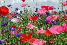 Flowers / by Valerie Adrian