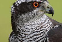 Hawks / by Bud Byrd