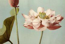 Botanicals / by Samantha Lord