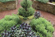 Gardens & Landscaping / by Anita Baul Schafer