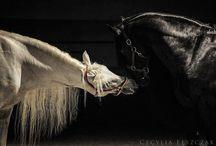 Horses / My love of horses. / by J & J