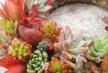 For Herbivores / by Celeste Thompson