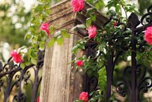 Flowers / by Pam Matthews
