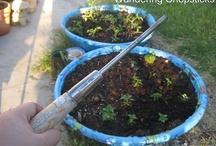 SMART STUFF!(Gardening) / gardening / by Brittany Burton Wilkinson