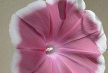 flowers / by Nancy Adams
