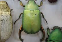 Insects / by Kelly Brenner