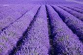 Purple / by LizDoll