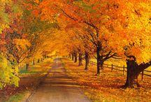 Fall - The Best Season   / by Janet Mackley