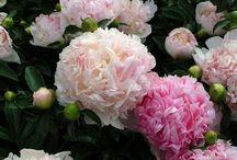 flower garden / by Chastity Allen