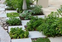 garden / by Diana Strid