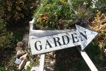 GARDEN Signs ♥ / Peas on earth! Grow! Bees please! Any funny, serious, philosophical, commanding, pleading, goofy, artistic, simple, rustic, repurposed, upcycled, or recycled signs, letters, words, poems, or phrases related to gardens or gardening. / by Melissa @EmpressOfDirt.net  ❤