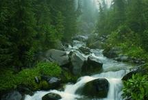 Streams & Rivers / by ron harvey