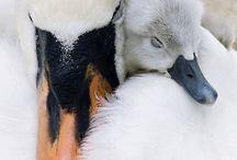Wild Birds | All Species / Unbelievable photo re-pins / by BirdSupplies.com