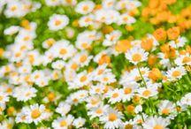 Secret Garden / by Kenzie