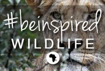 #beinspired - wildlife / Africa's wildlife is the most diverse on the planet - from the awe-inspiring Big 5 to graceful antelope, tall & gangly giraffe, grunting hippo and speedy cheetah - there's so much to see and experience. A game drive might include a sighting of an endangered scrub hare, a rare African wild dog or a shy herd of eland, or perhaps it could include a thrilling chase, or a noisy kill! Whatever inspires you to travel to Africa = wildlife is certainly part of that inspiration... / by Go2Africa