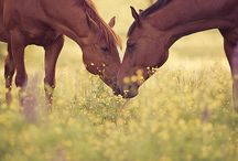 HORSE SENSE / Horses are beautiful, graceful and perfect.  I love them.  They are so wise and their eyes see into the heart of your soul. / by Desiree Aaron