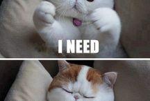 Cute cat ever / by Samantha Burkhart
