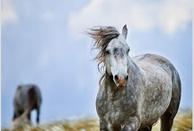 Horses = All that I am / Horses and western fashion will always be where my soul finds healing and comfort at  / by Katie Moore