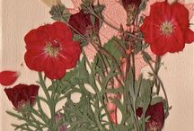 Pressed flowers / by Glenna Smith