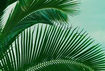 Palm Trres / by Red Persimmon Imports - Katrina Ulrich