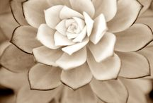 Gardening / by Lynne Jones