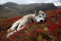Wildlife / by Scott Robertson