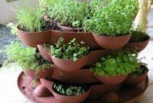 Herb Garden / by Tammy Ezell