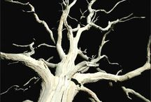 Tree's that make the hair on the back of your neck stand up / by Elizabeth Munday