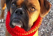 Beautiful Boxer Babies / What is my favorite breed of dog?  Boxers!  Love them!  <3  I have one now.  Have had four in total, usually two at a time because they love each other so. Can't imagine my life without one of these beautiful clowns. / by Lois Boyce Flack