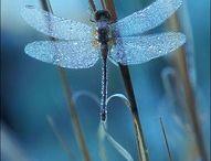 Dragonfly / by Rachel Munoz Striggow