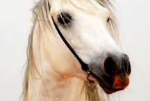 Horses / by Susan Chard