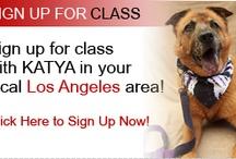 KATYADOGSROCK.com / KATYA DOGS ROCK! CHECK OUT KATYA'S DOG TAMING TIPS! / by Katya OF Katyamusic.com
