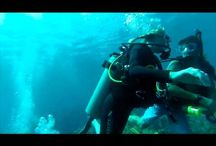 Tyler visits Roatan / by Coconut Tree Divers